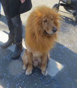 Filou - Lion